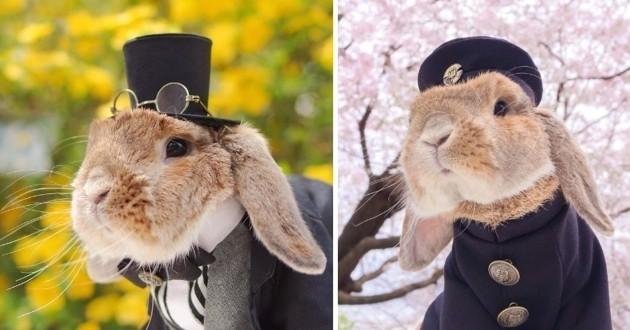 PuiPui le lapin le plus mignon au monde