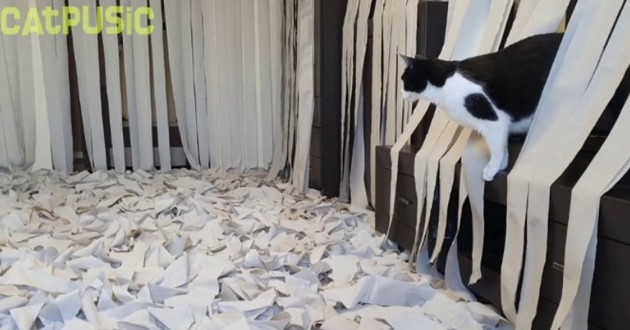 Pusic et son obsession pour le papier toilette