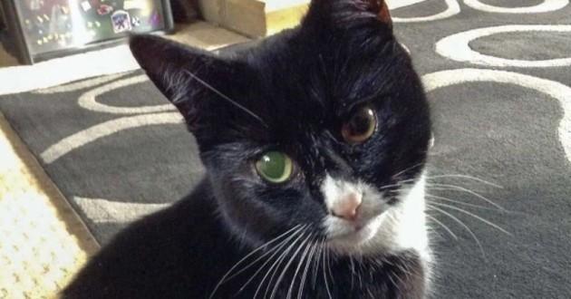 Chat miraculé reçoit 30 plombs