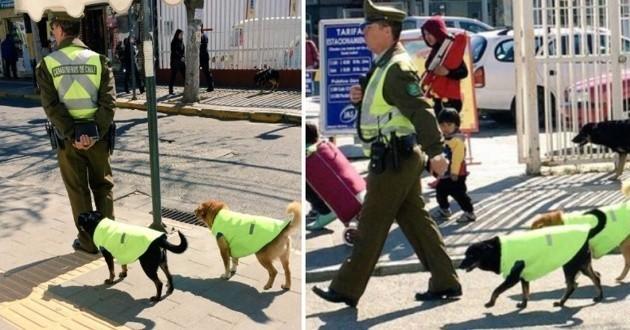 Des chiens errants devenus chiens policiers