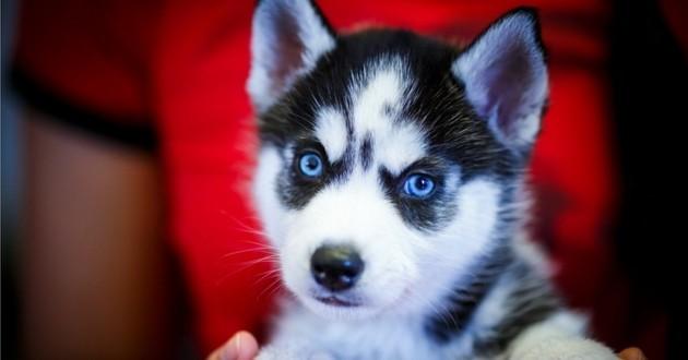 Etes-vous incollable sur les races de chiens