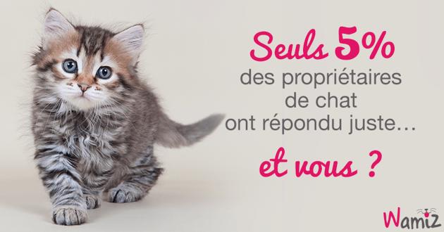 Seuls 5% des propriétaires de chat ont répondu correctement à ce test... Et vous ?