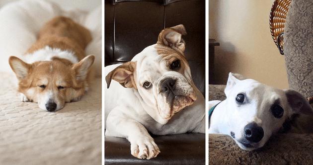 races chien appartement