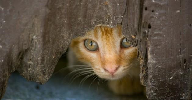 rencontres chat avec des inconnus site de rencontres pour les gars courts
