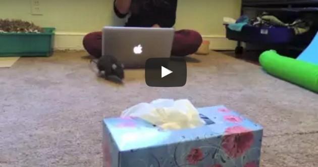 Quand la vérité sur les rats éclate au grand jour… bluffant ! (Vidéo du jour)