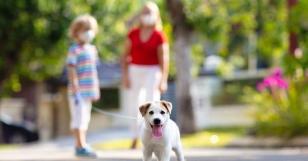 promenade d'un chien pendant le confinement