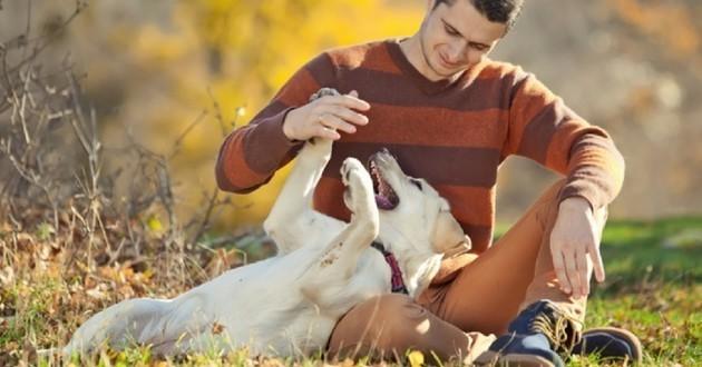 Labrador joue humain