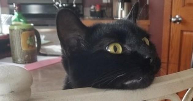 chat noir chaise