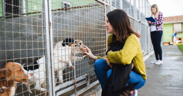 Femme accroupie devant une cage avec des chiens dans un refuge