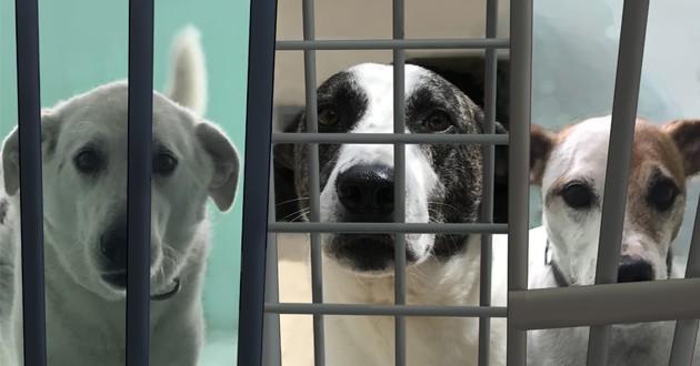 chiens du refuge ARPA