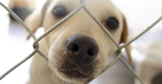 chien en refuge