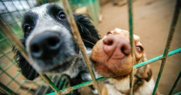 deux chiens enclos refuge
