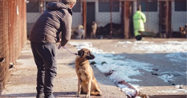 chien de refuge