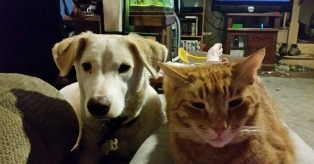 chat chien refuge