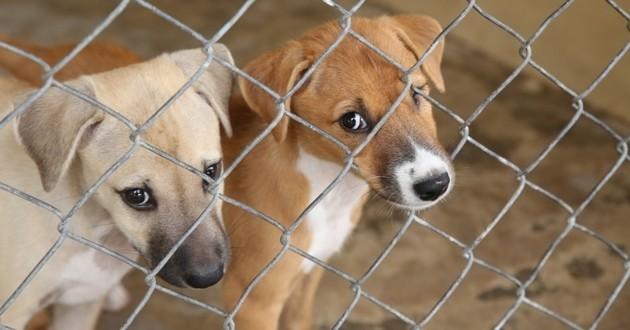 Doit On En Finir Avec L Isolement Des Chiens En Box Dans Les Refuges Cause Animale Wamiz