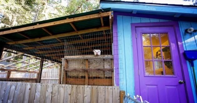 chalets pour chiens