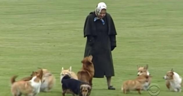 Elizabeth II et ses chiens