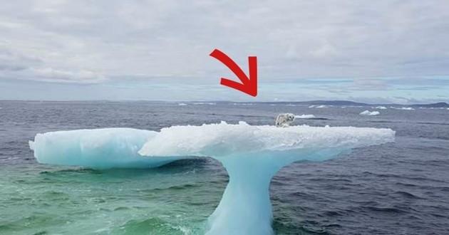 iceberg mer renard