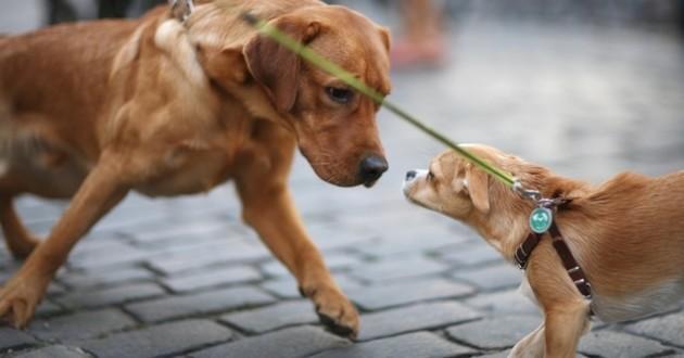 rencontre chiens dans la rue