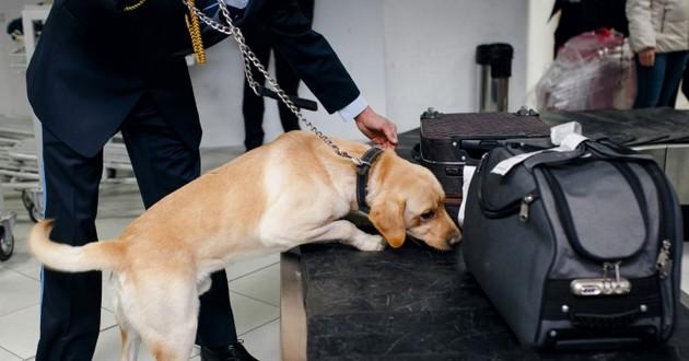 Un chien renifleur découvre 116 Kilos de cornes de rhinocéros