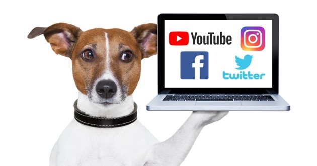 chien influenceur youtube facebook instagram