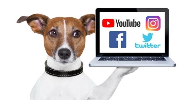 chien influenceur youtube facebook instagram