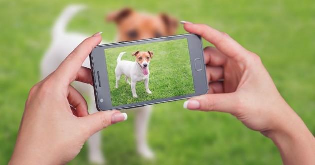 un chien pris en photo sur un smartphone