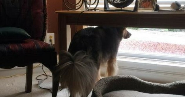chien fidèle attend sa maîtresse