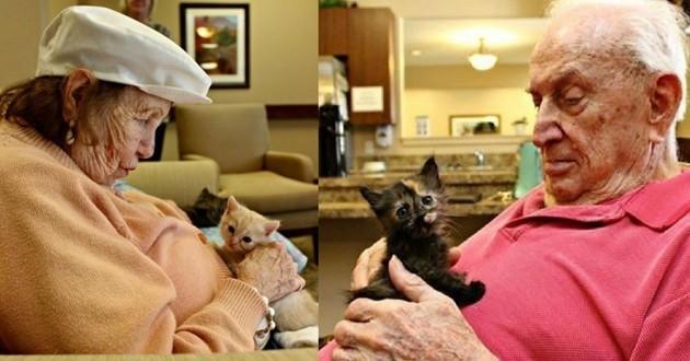 chatons maison de retraite