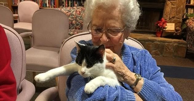 Chat en maison de retraite