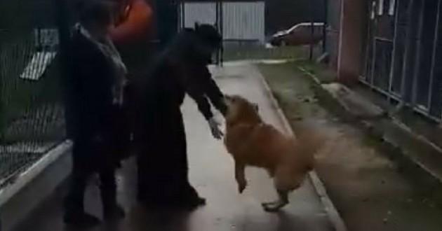retrouvailles chien SPA