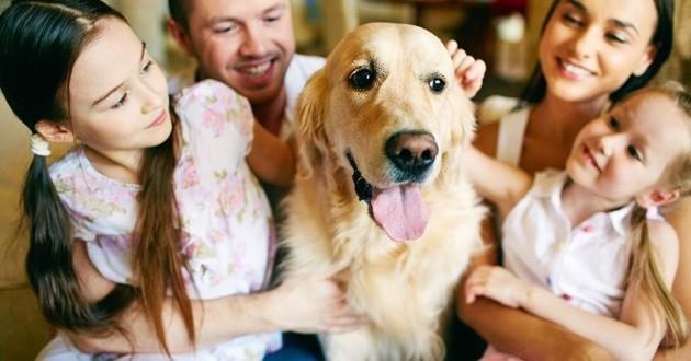 Chien adopté famille