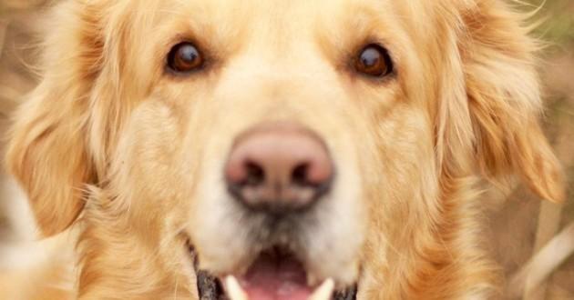 Michaël Youn rend un vibrant hommage à son chien décédé