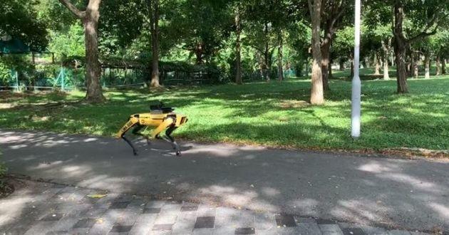 Un chien robot patrouille à Singapour — Coronavirus