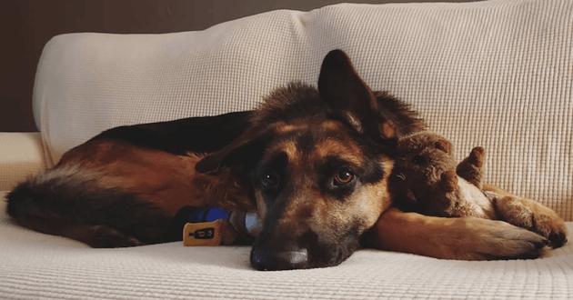 Rocco allongé sur son canapé