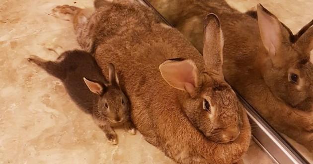 Ce petit lapin est obsédé par sa copine qui fait 4 fois sa taille