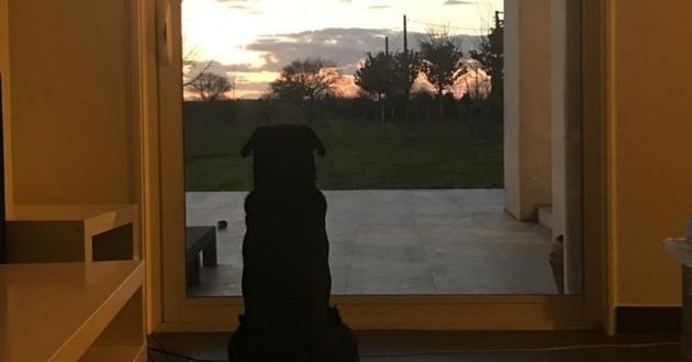 Emiliano sala et son chien