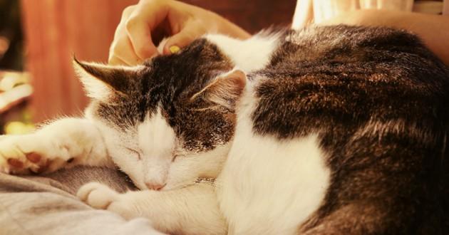 ronron thérapie chat