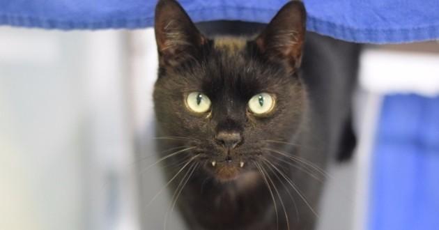 Abandonné, ce chat à l'allure de vampire cherche une nouvelle famille
