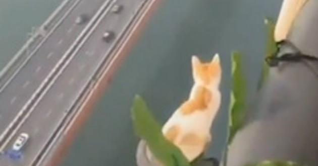 chat à 100 mètres de hauteur