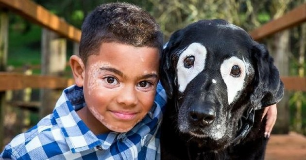 rowdy chien vitiligo