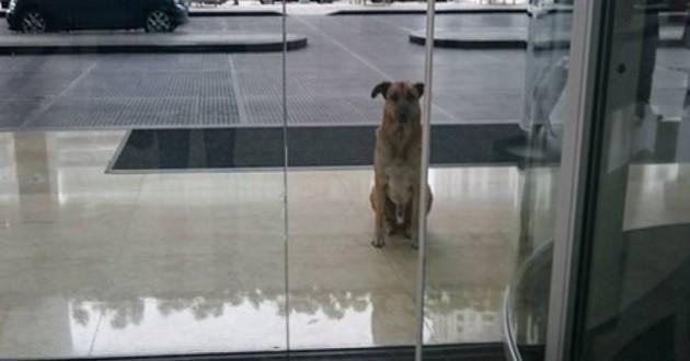 L'incroyable histoire d'amitié d'une hôtesse de l'air et d'un chien errant