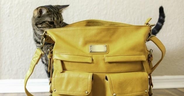 Une Canadienne dissimule son chat dans son sac pour entrer en Nouvelle-Zélande… mais échoue