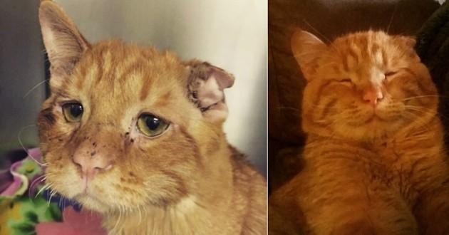 chat le plus triste du Web a été adopté