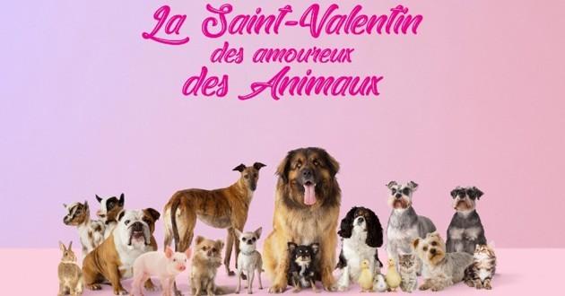 saint valentin veepee