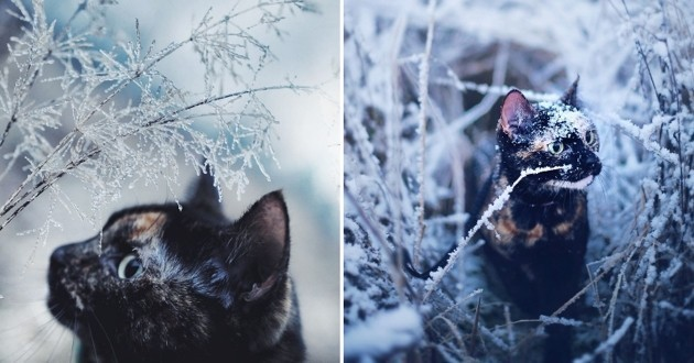 chat saisons