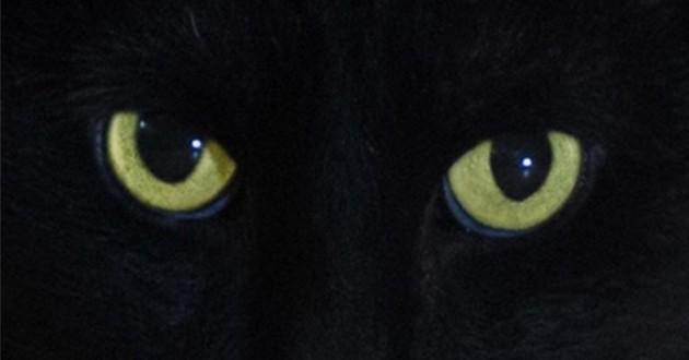 Salem de Sabrina l'apprentie sorcière