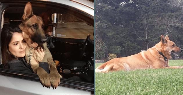 Le chien de Salma Hayek, fusillé par un voisin