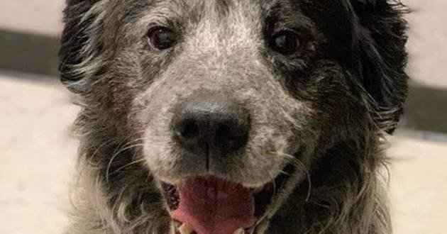 Sanford chien qui sourit tout le temps