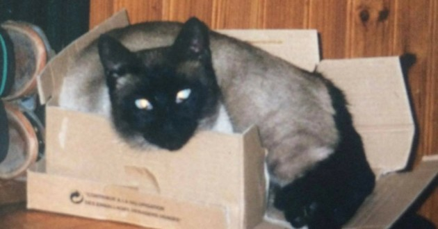 Schouff chat martyrisé enfant